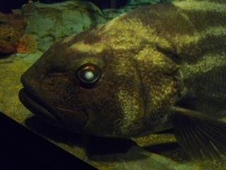 0219水族館3.JPG
